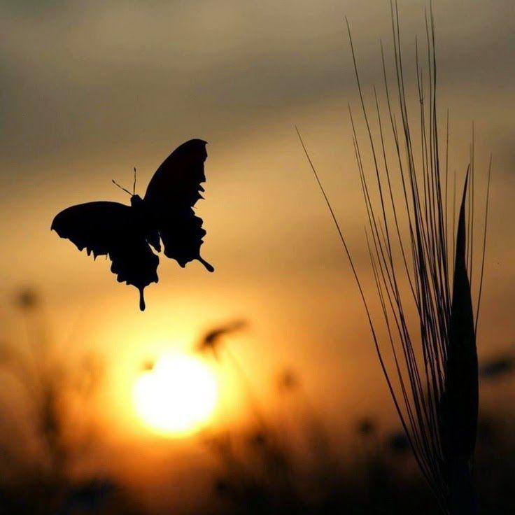 Butterflyyy~~~