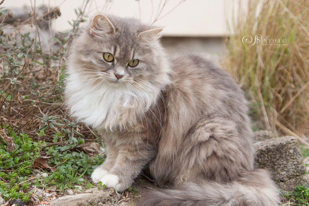 Pin Von Griselda Moran Auf Gato Schonen Katzen Katzen Katzen Bilder