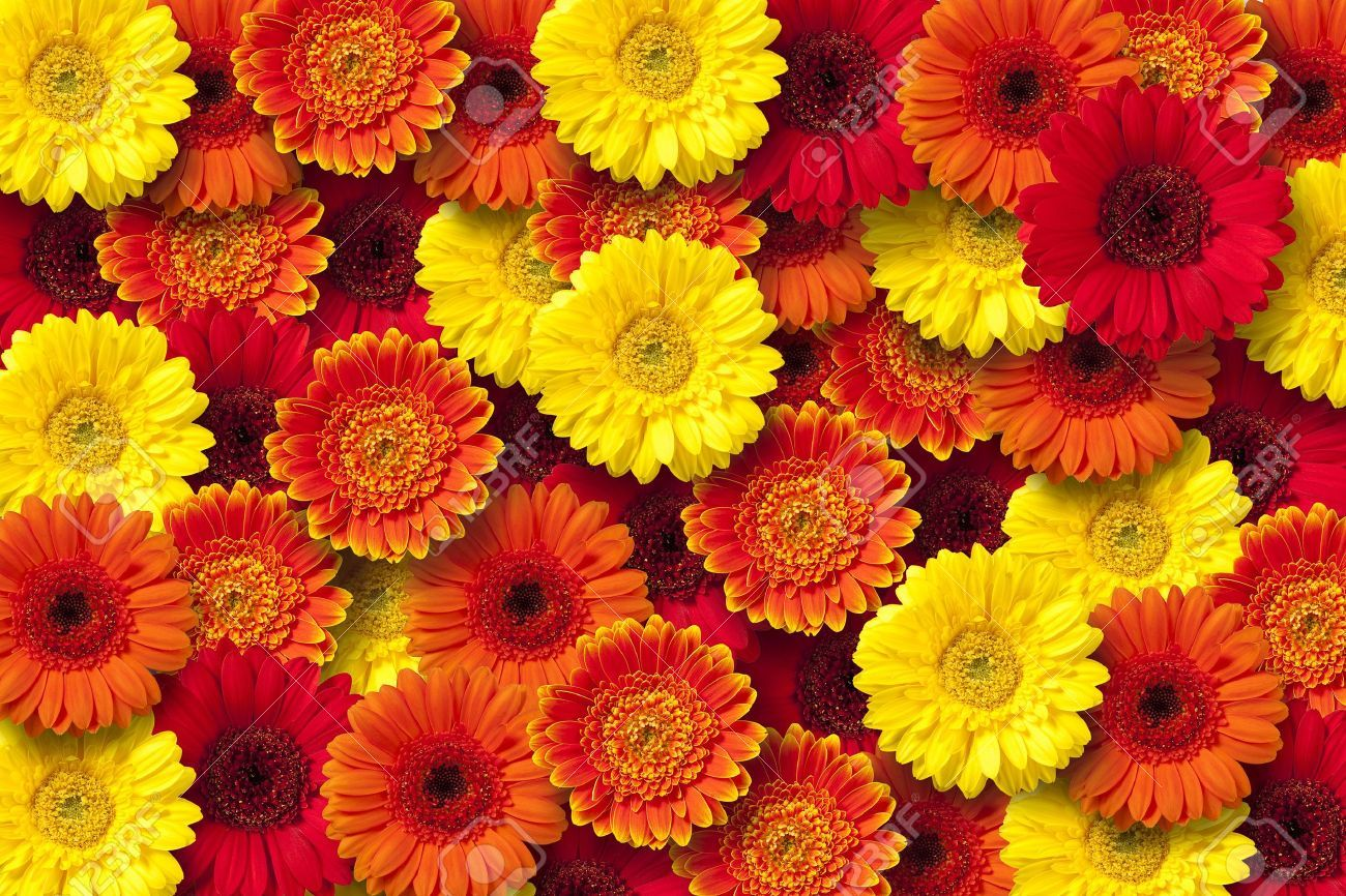 Red yellow flowers google search emily pinterest yellow flowers mightylinksfo