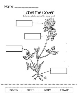 Identify The Parts Of A Plant Worksheet Plants Worksheets Parts
