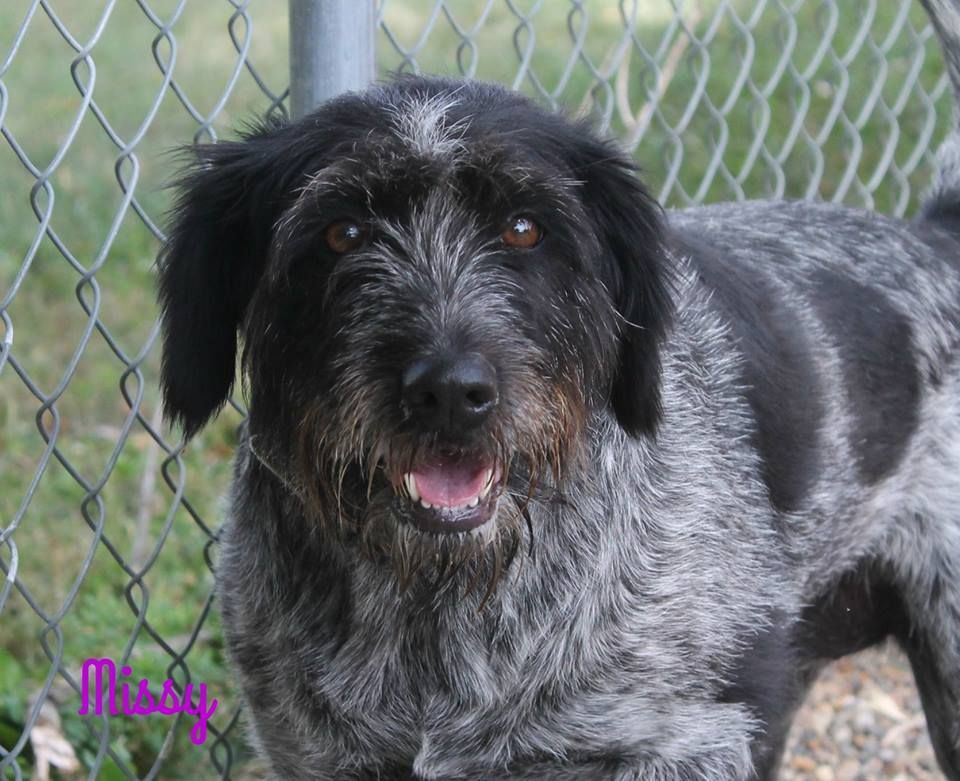 Adopt Missy on Dogs, Pets, Humane society