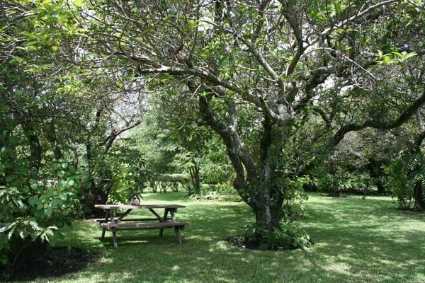 shaded south african gardens - Google Search