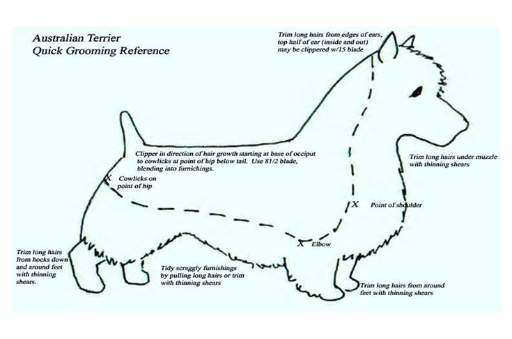 dog grooming chart that shows hair length