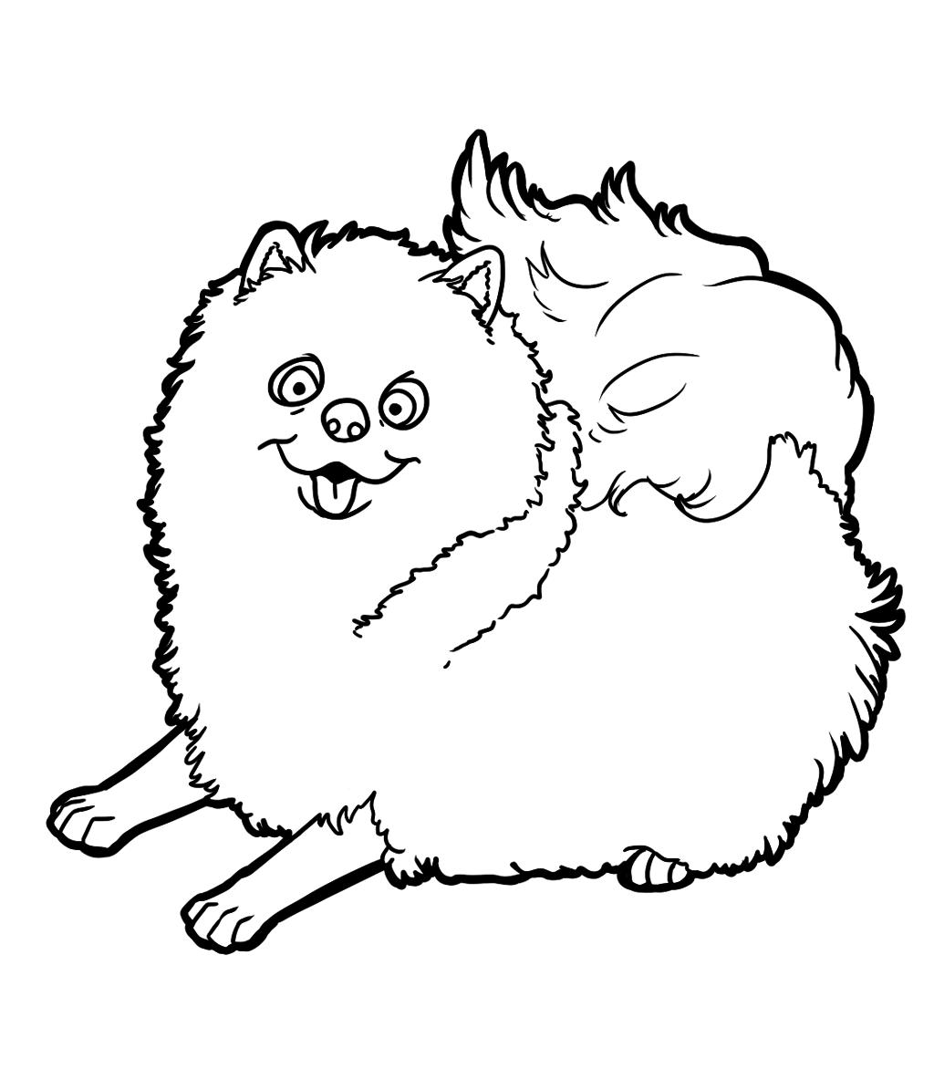 Pomeranian Dog Animal Pet To Print And Color