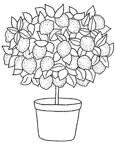 Lemon tree#decorationideas #livingroomdecor #designlogo #designgrafico #designspiration #nailoftheday #nailbar #nailitdaily #nailartclub #nailaddict #designerclothes #nailstyle #nailswag #nailsoftheday #nailsonpoint