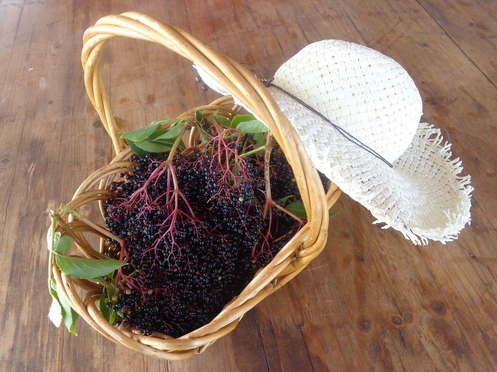 Elderberry syrup - Recipe