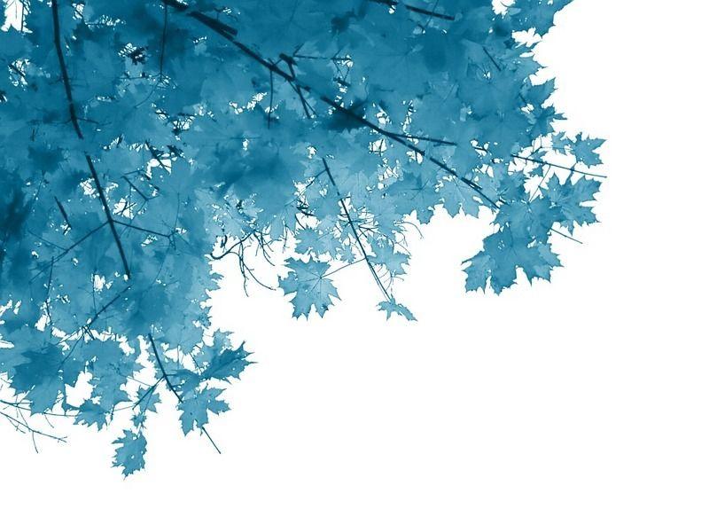 on leaf blue - photo #36