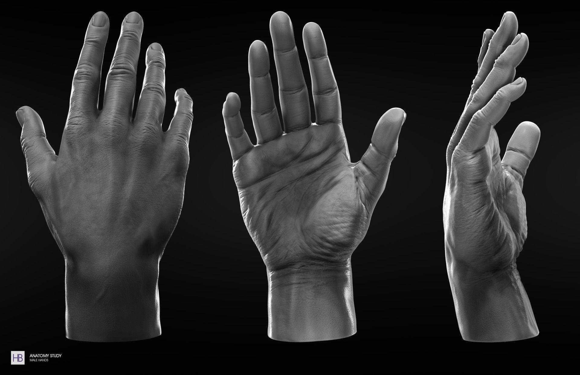 Anatomy Study , Male Hands by Haroldo Braga