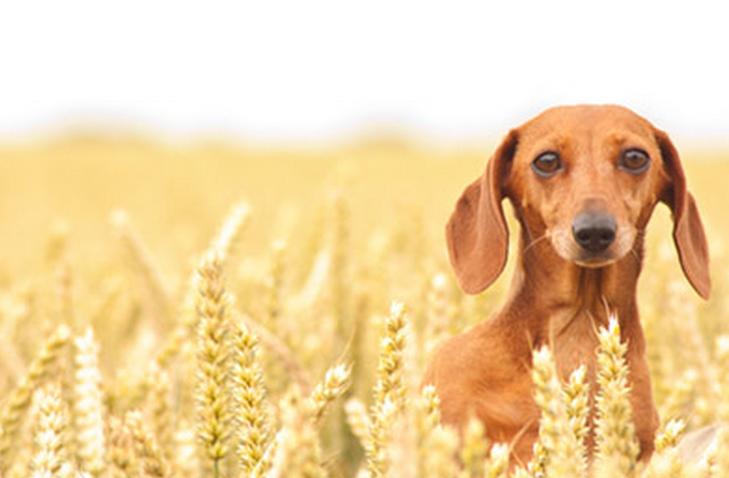Home Made Dog Food Worries Some Vets Make dog food