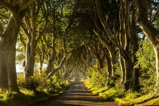 'A road runs through the Dark Hedges tree tunnel at sunrise in Northern Ireland, United Kingdom' Photographic Print - Logan Brown | Art.com