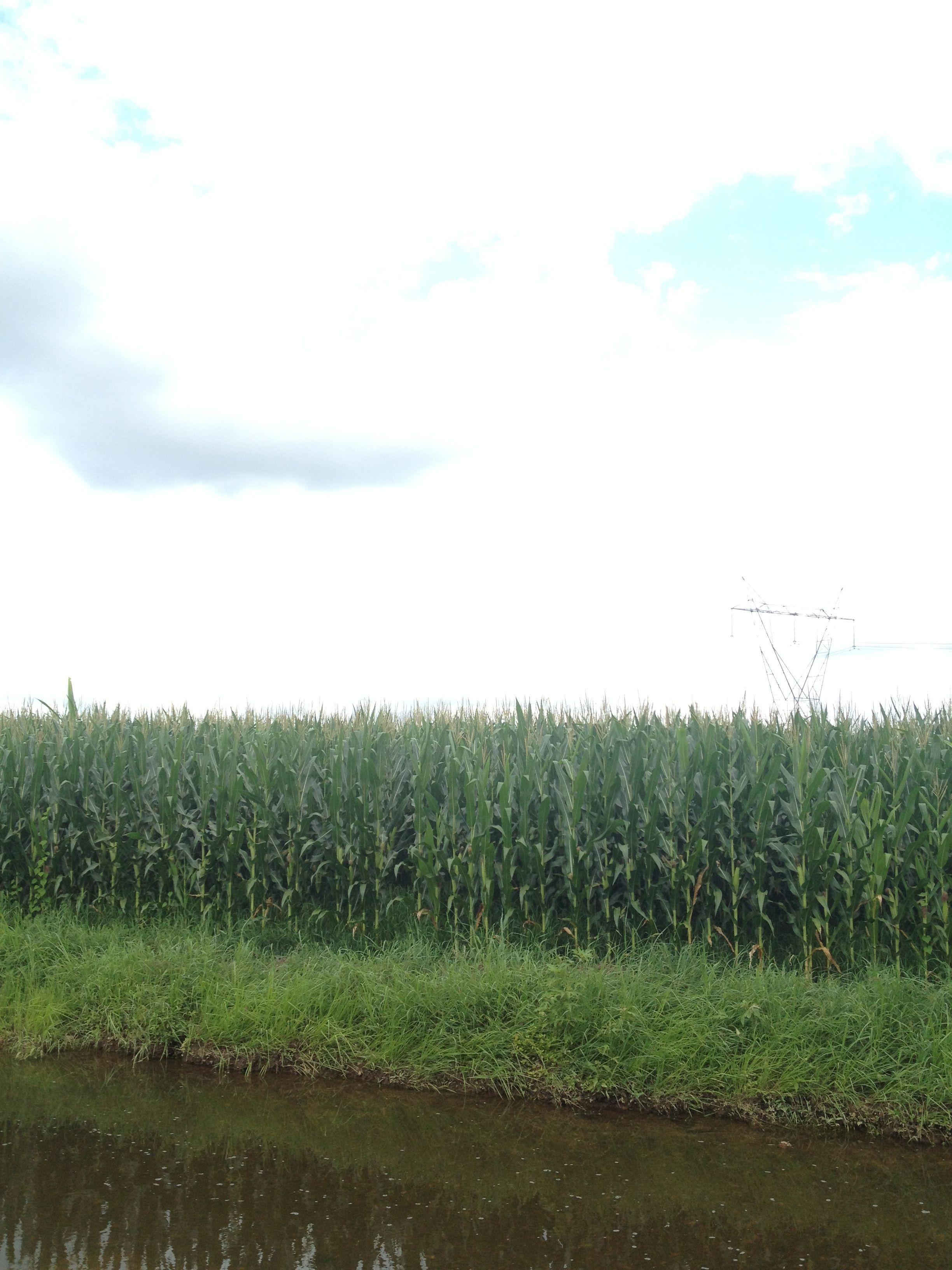 Corn looney farms farm life farm natural landmarks