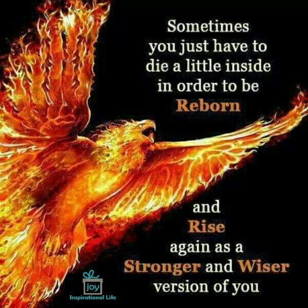 Image result for coming back stronger phoenix