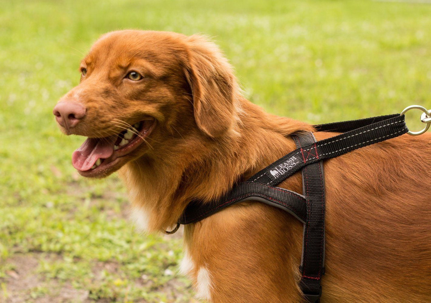 Leashboss No Pull Dog Harness Front And Rear Clip Reflective
