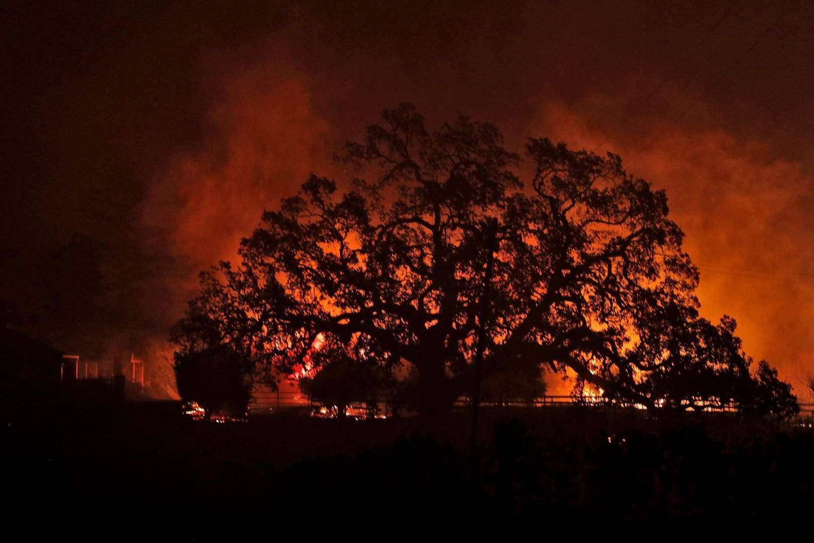 10 Dead As Wine Country Fires Burn At Least 1 500 Structures Force Evacuations A Structure Burns Behind An Oak Tree As A Wild Fi Wine Country Fire Wild Fire