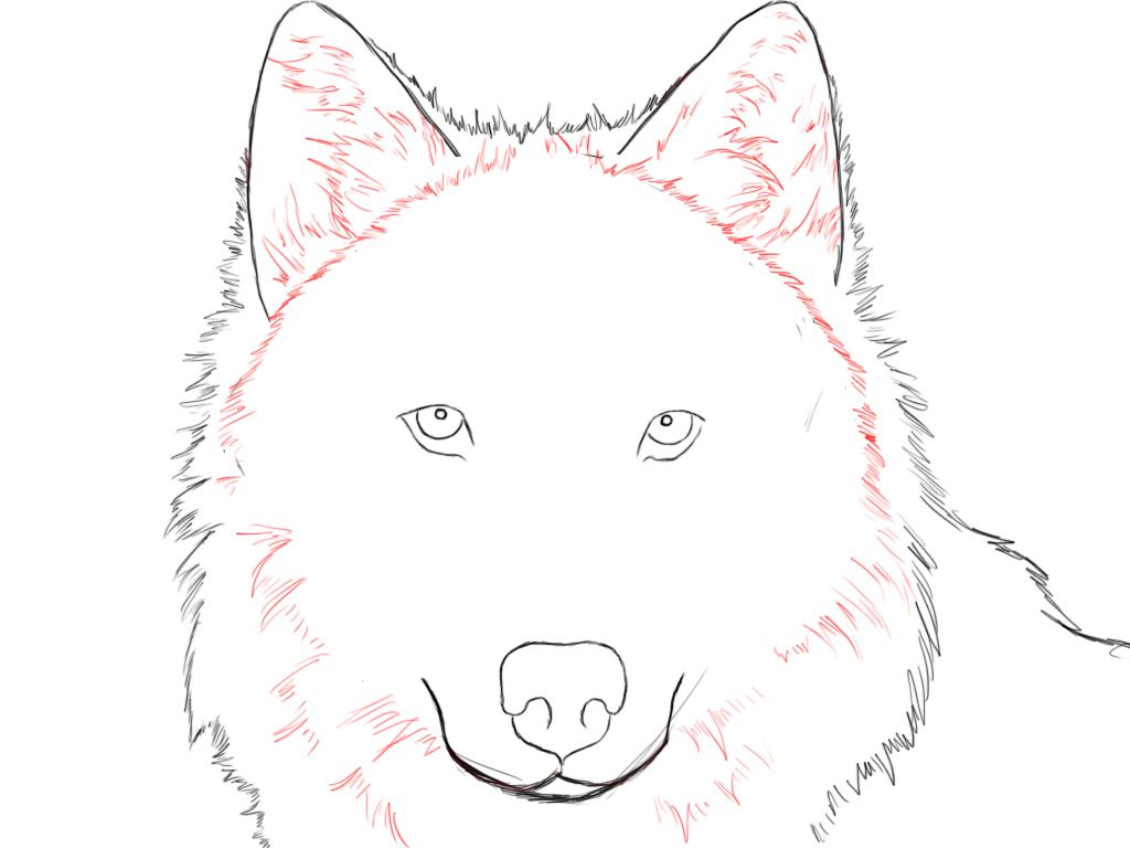 Wolf Drawings Step by Step | Erase the guidelines from the previous steps, and give your wolf a ...