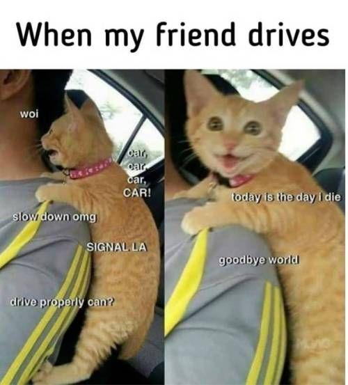 Pin By Karina Christensen On Sooooo Cuuuute Funny Animal Jokes Funny Friend Memes Funny Cat Memes