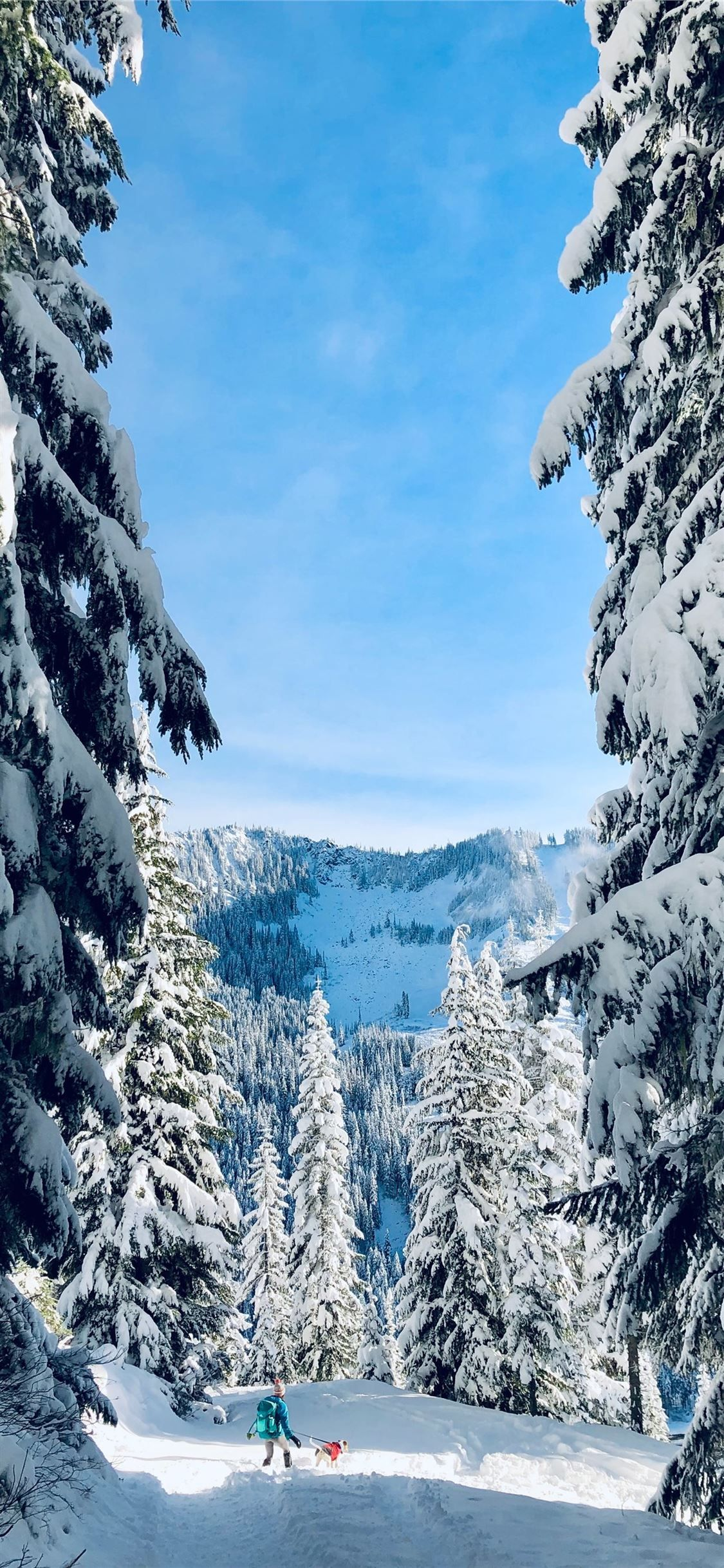 Trees Covered By Snow Usa Unitedstates Iphonexwallpaper Tree Cover Iphone X Wallpapers Wallpaper