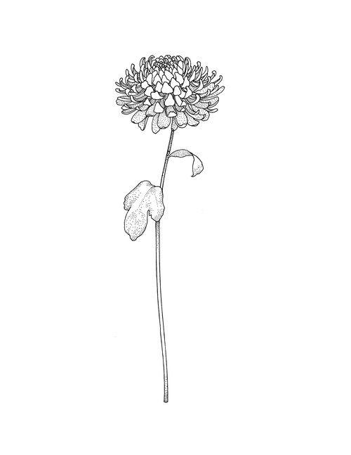 Chrysanthemum Tattoo Chrysanthemum Tattoo Birth Flower Tattoos Mum Tattoo