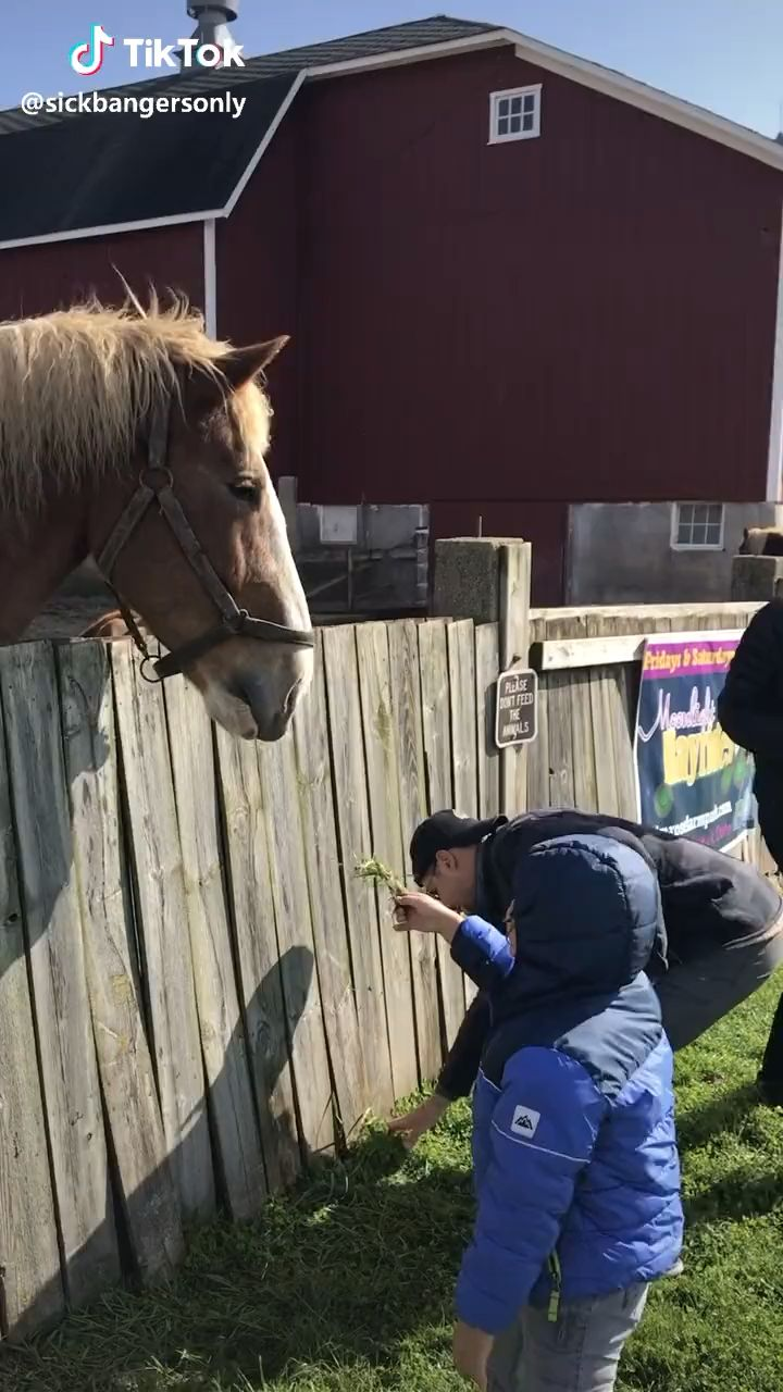 Tiktok Funny Video Funny Video Kids Horses Animals Funnyanimals Funny Horse Pictures Funny Horses Funny Horse Memes