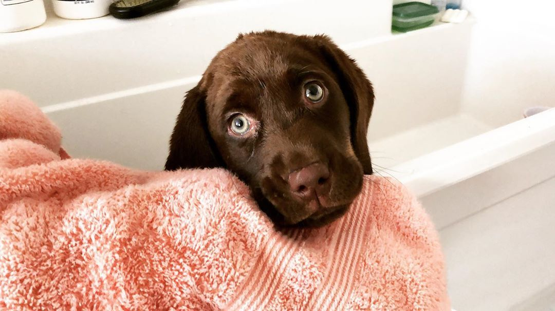 Watch The Best Youtube Videos Online Oh No Bath Time I Promise
