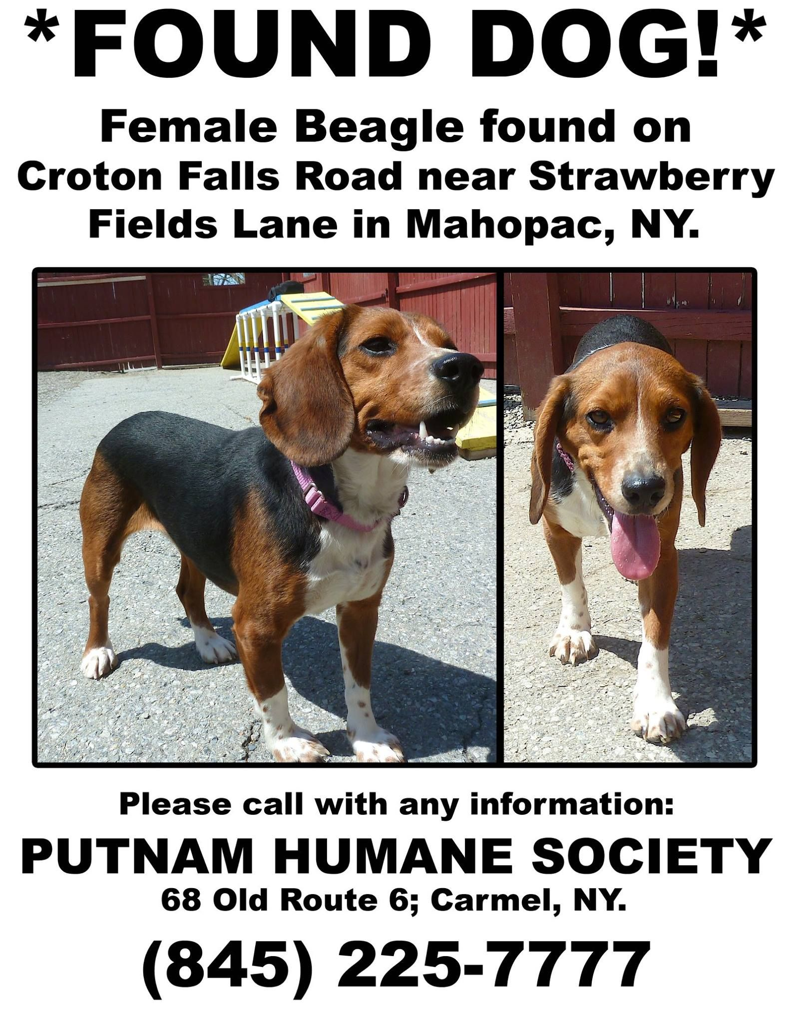 Putnam Humane Society May 4 Edited Found Dog No One Has