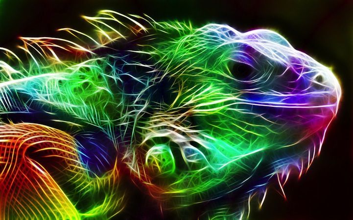 Spectacular Animal Portraits as Electrifying Bursts of Color