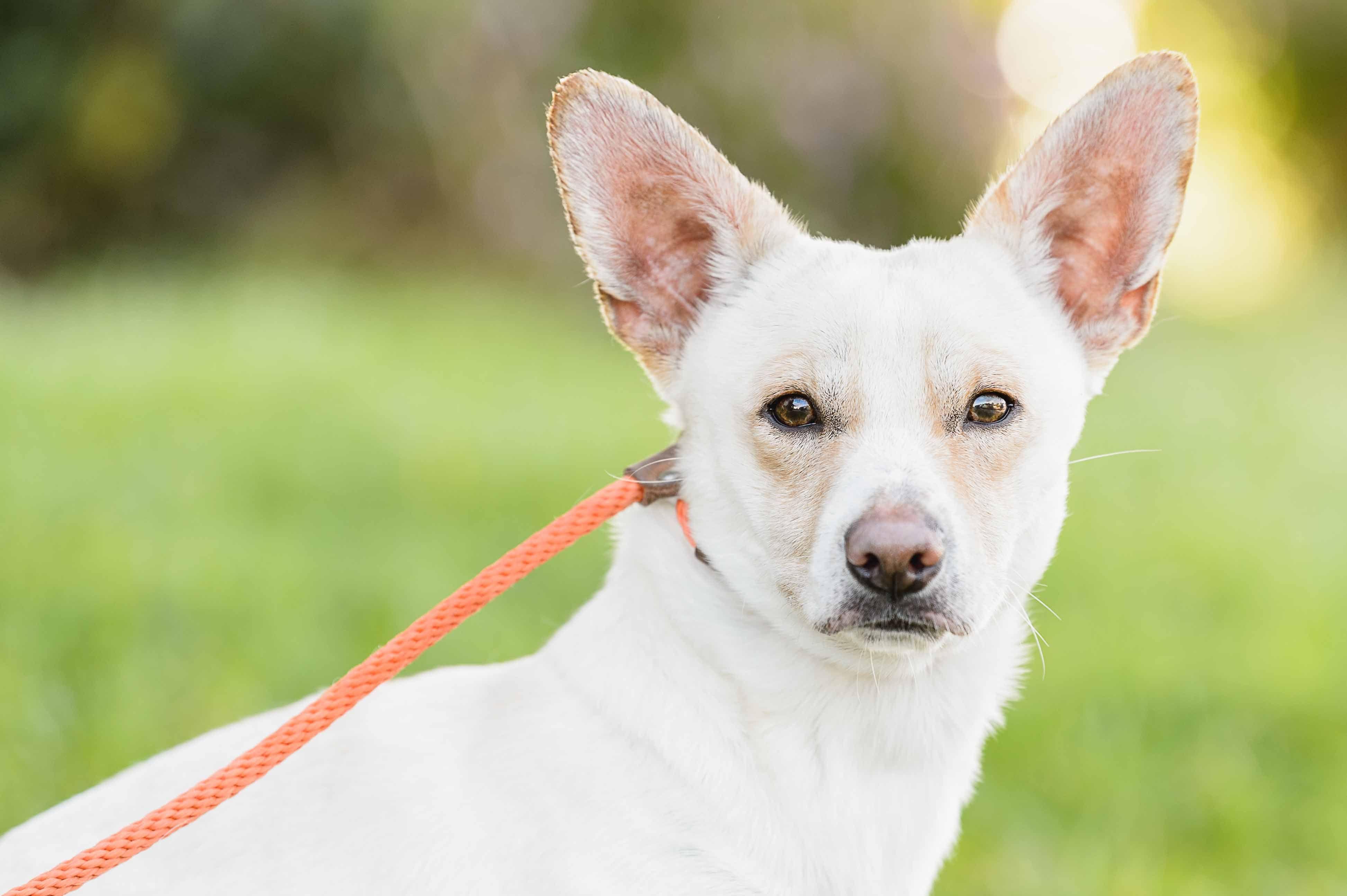 dog for Adoption in El Cajon, CA. ADN781542 on