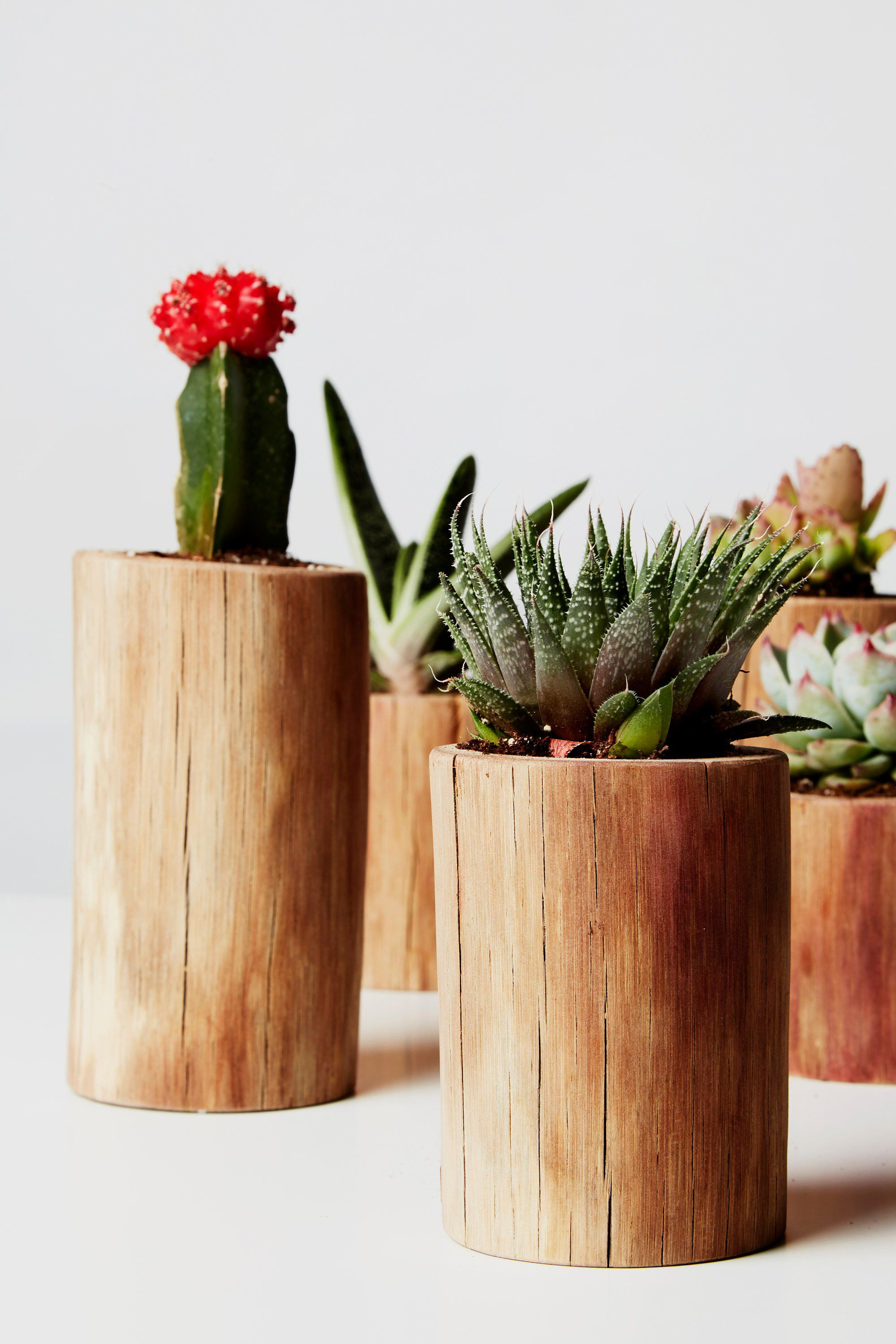Mini Cactus Planter Set Succulent Planter Rustic Plant Etsy In 2020 Plant Decor Cactus Plant Pots Small Cactus Plants