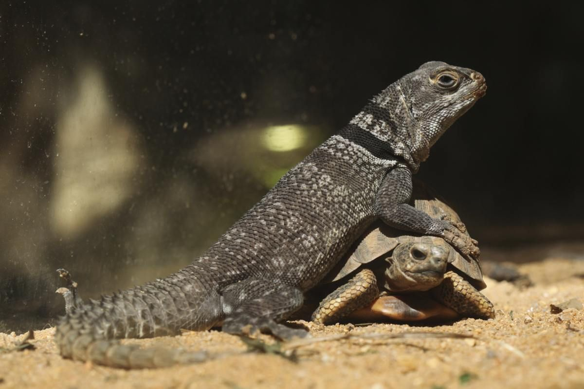 A List Of Different Types Of Lizards With Facts And Pictures Lizard Types Lizard Animal Pictures