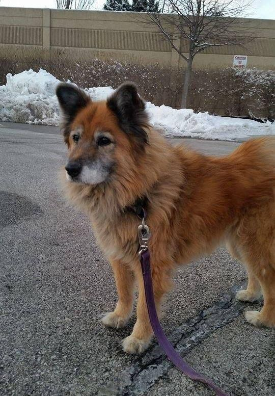 Adopt Millie On Golden Retriever Mix Pets Dogs