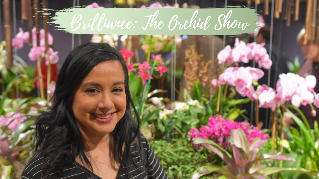 Brilliance The Orchid Show 2020 at Chicago Botanic Garden
