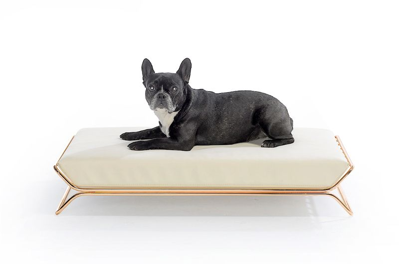 designwelove is a new dog accessories brand from italy that's