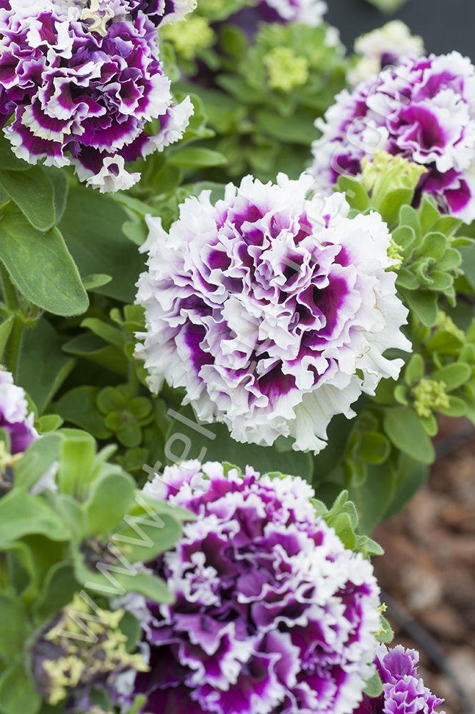Kwiaty Wiosenne Cz 2 Nazwy Wczesnych Kwiatow Poradnik Ogrodowy 21 Youtube Plants Flowers