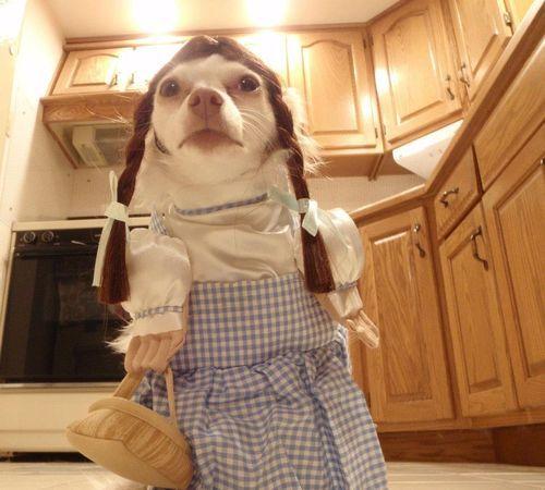 Dorothyyy!