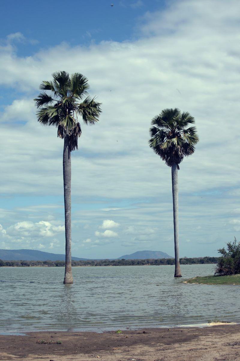 sea palmtree <3