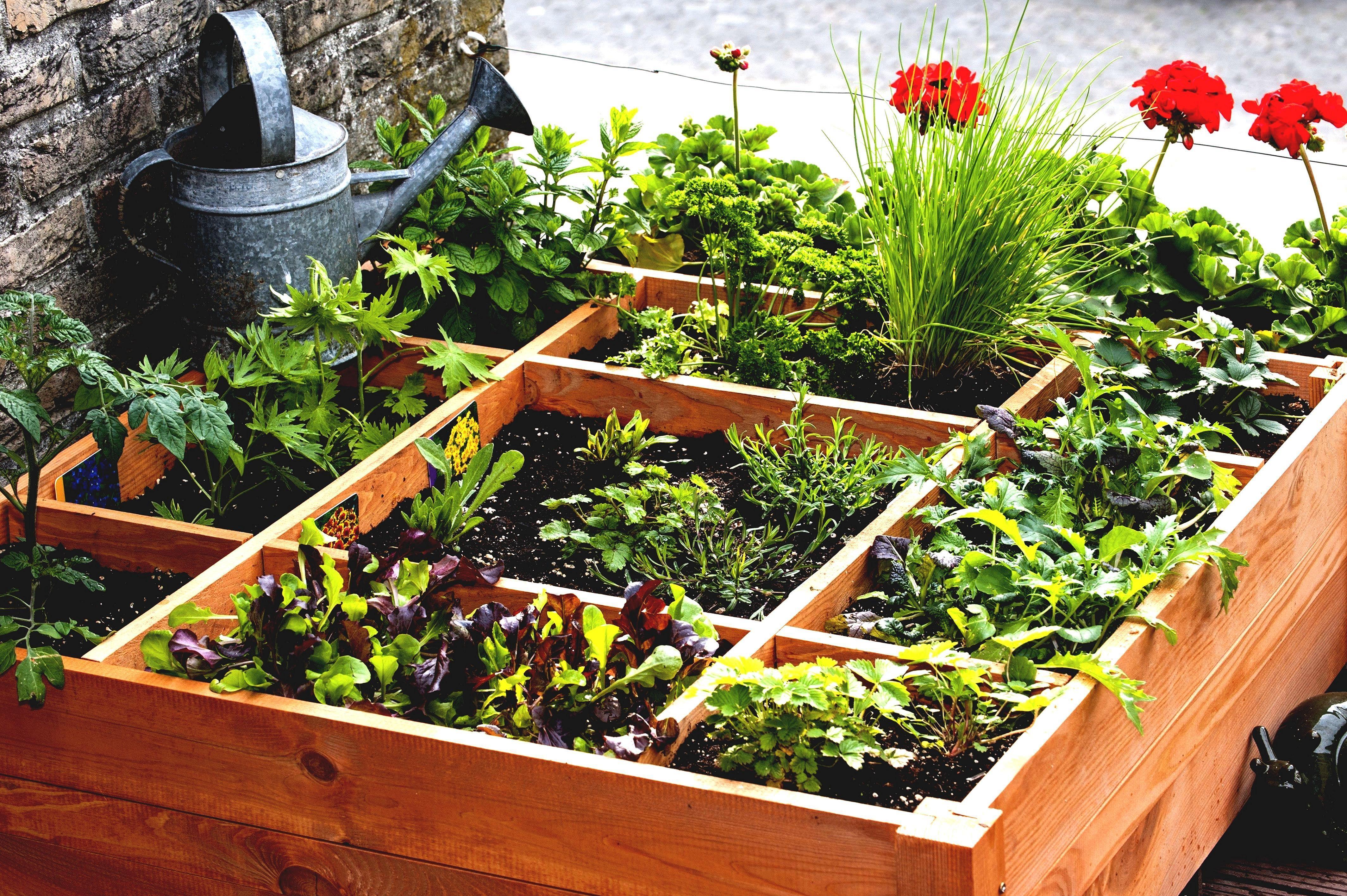 Garden Plan Design Ideas | Small vegetable gardens ...