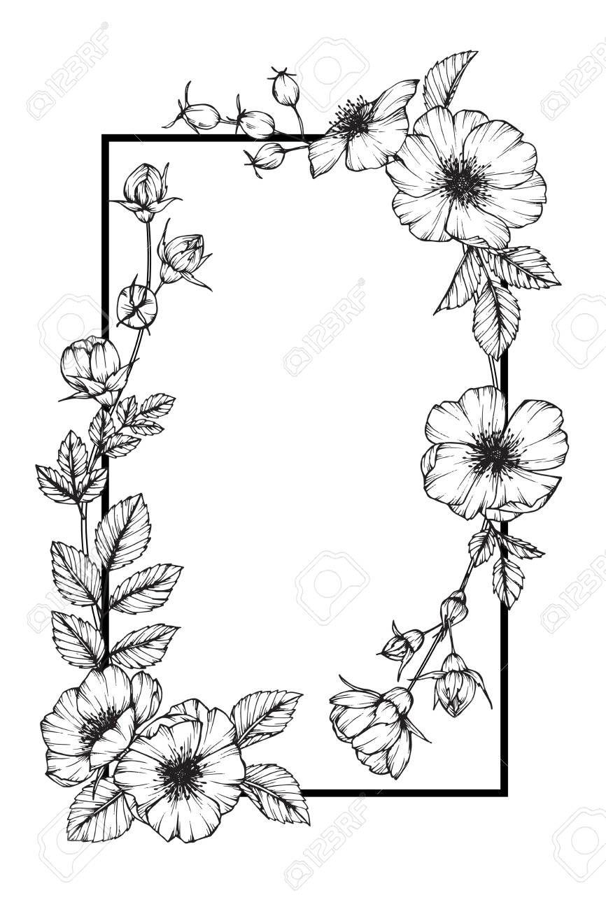 Wild Rose Flower Frame Drawing Affiliate Rose Wild Flower Drawing Frame In 2020 Flower Sketch Images Wildflower Drawing Flower Drawing