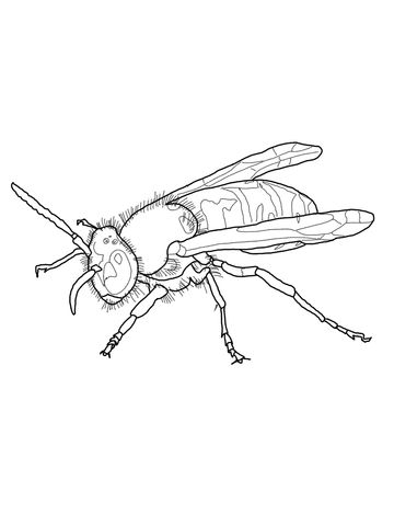 European Wasp Coloring Page Coloring Pages Free Printable