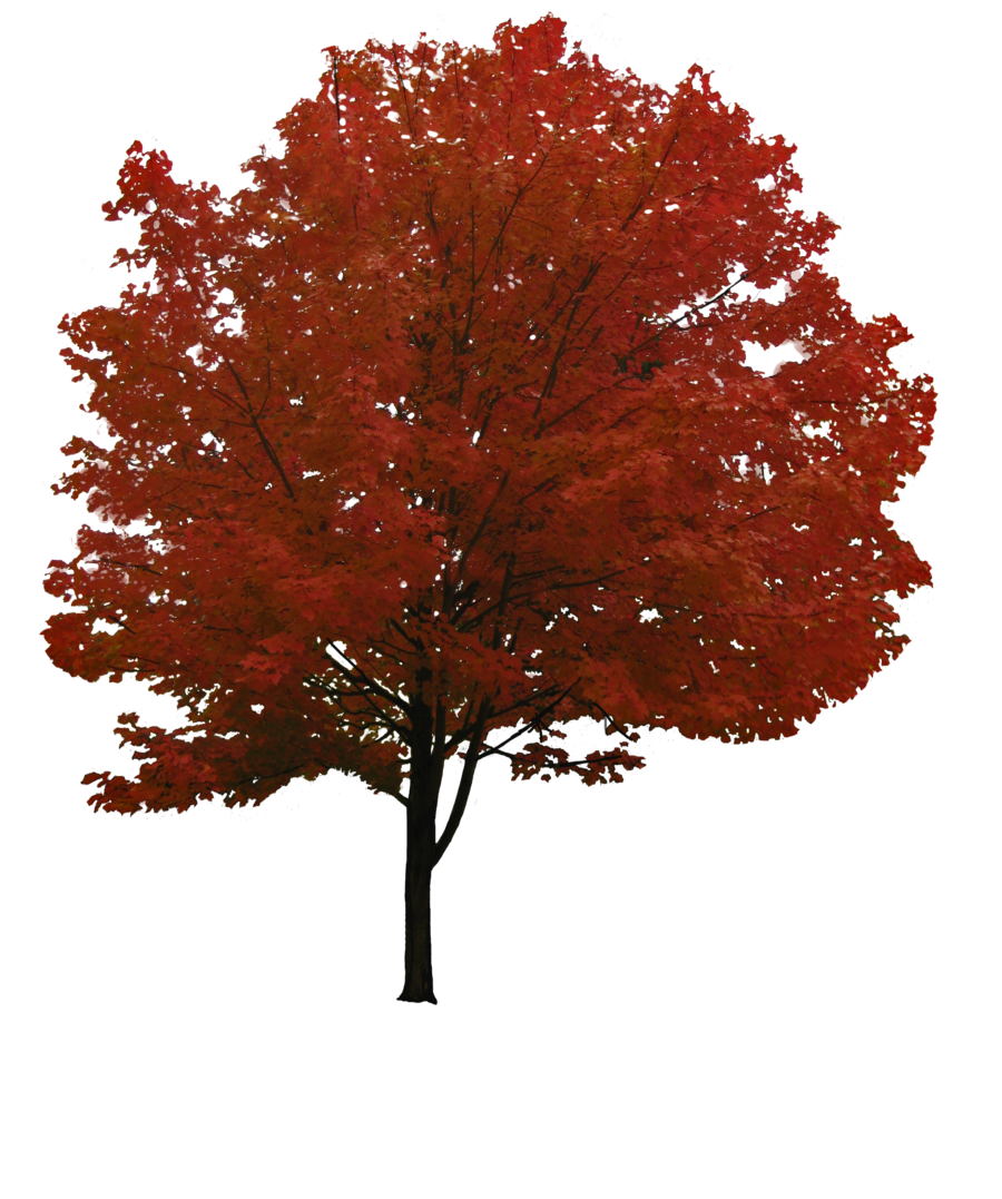 Download Png Image Tree Png Image Free Download Picture Tree Photoshop Garden Illustration Picture Tree