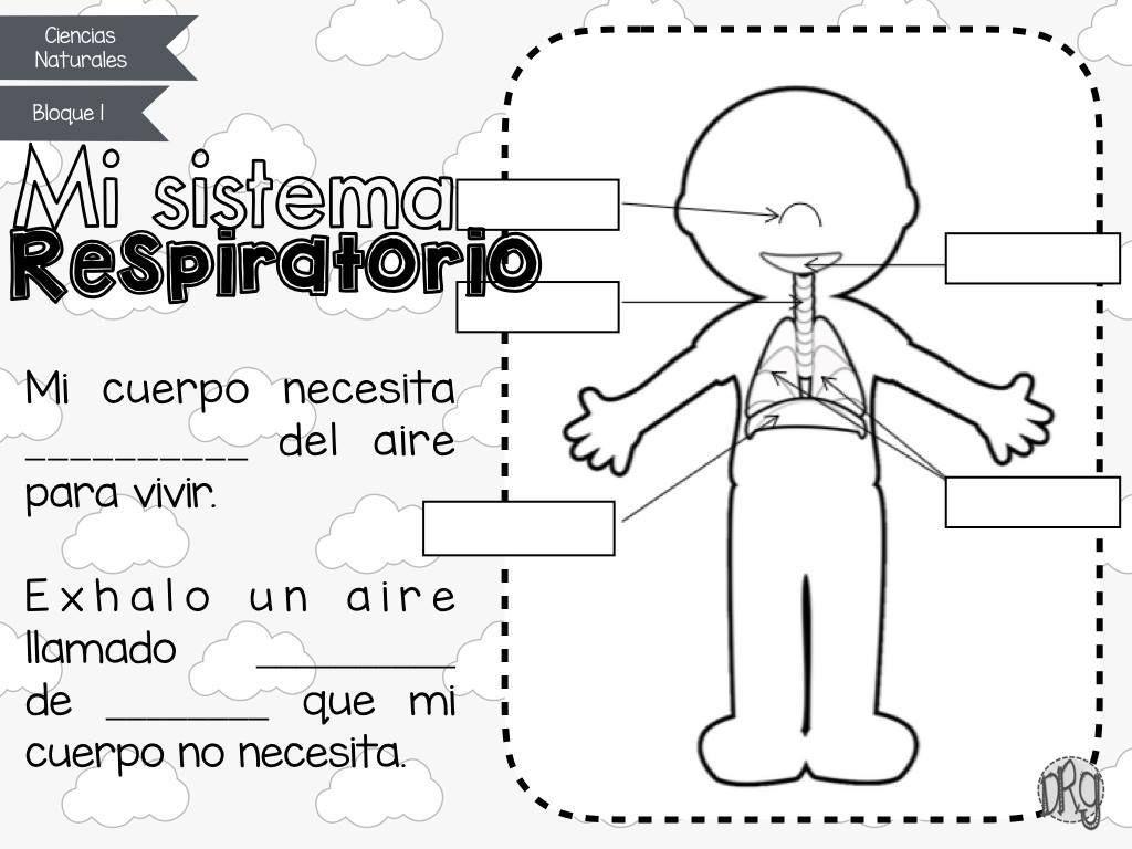CUADERNO DE TRABAJO Cómo funciona mi cuerpo | Sistemas del cuerpo humano,  Sistemas del cuerpo, Aparatos del cuerpo humano
