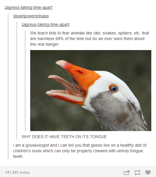 The Truth Behind Duck Duck Goose Best Of Tumblr Funny Tumblr Posts Hilarious