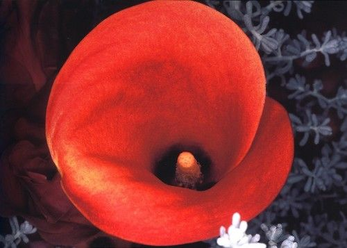 "Nobuyoshi Araki ""Flowers"""