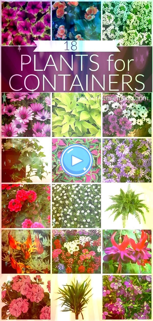 for Containers Plants for ContainersPlants for Containers See how to take cuttings from a hydrangea and propagate them to grow into new plants See the tutorial for stepby...