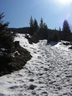 Winterwanderung, auf dem Weg zum Hörnle in den Ammergauer Alpen