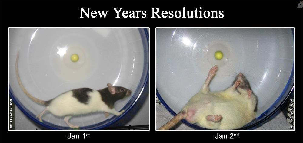 Another Year, Another Broken New Year Resolution -6796