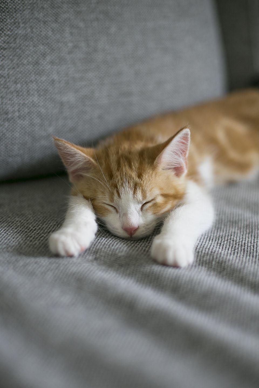 How to Avoid 9 Common Cat Owner Mistakes Sleeping kitten