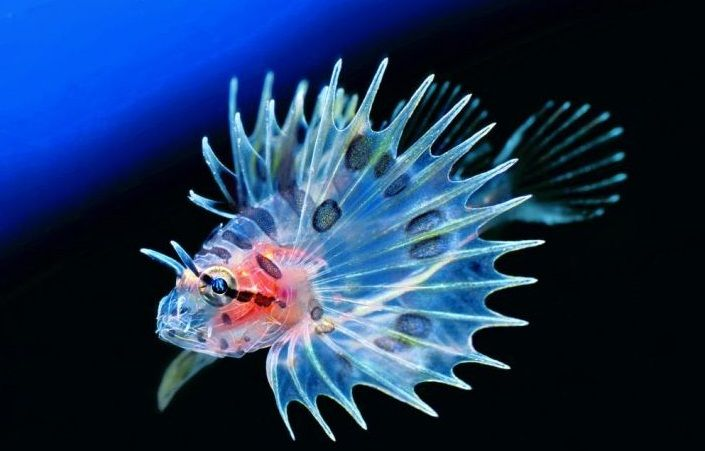 World Tourism The Most Beautiful Seas In The World The Coral Sea Beautiful Fish Sea Fish Lion Fish