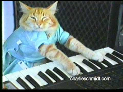 Keyboard Cat Behind The Scenes Shocking New Footage Internet Cats Cats Cat Memes