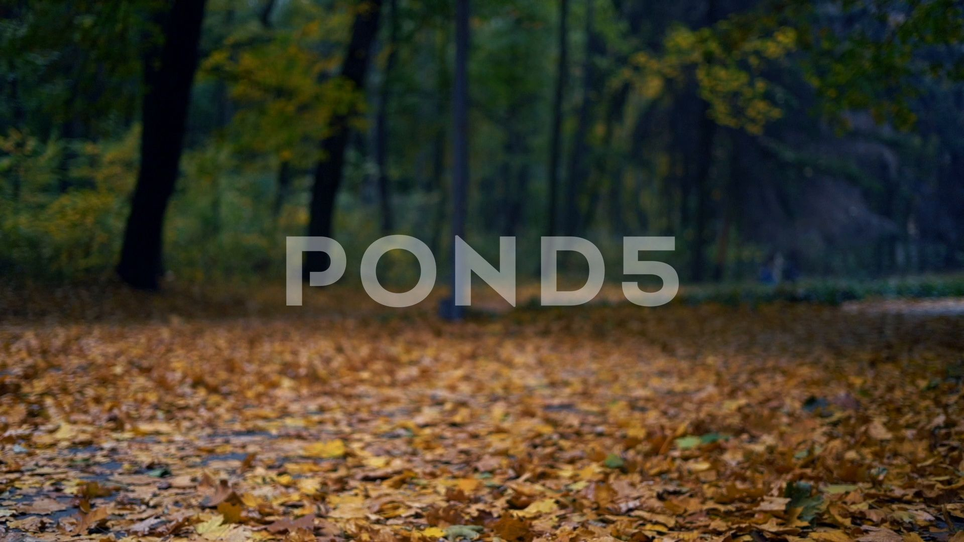 Autumn leaves falling in slow motion Stock Footage #AD ,#falling#leaves#Autumn#slow #autumnleavesfalling