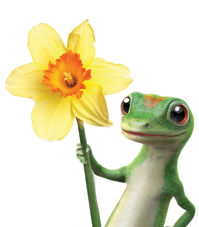 Image result for geico gecko